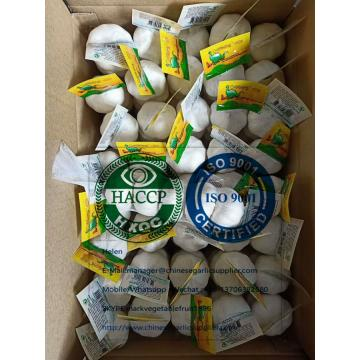 Pure white garlic with Tube meshbag & Carton package for EU market