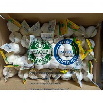 China Pure white garlic with tube package for EU market
