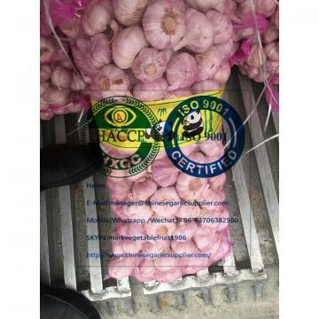 China Normal white garlic with meshbag package to Ukraine