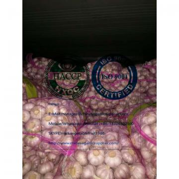 Normal white garlic with meshbag package arrived at Ukraine client's warehouse