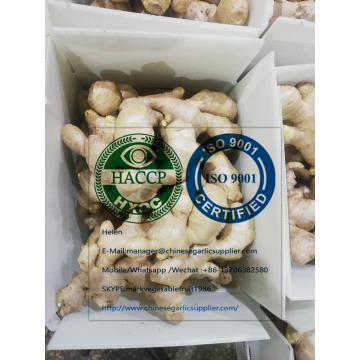 Top quality china ginger with 5KG Plastic carton