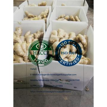 China Ginger with Plastic carton