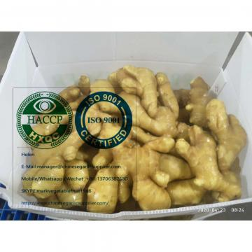 Fresh china ginger with Plastic carton