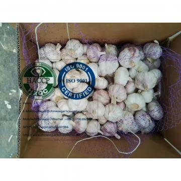Normal white garlic with 10KG loose carton to Brazil market.