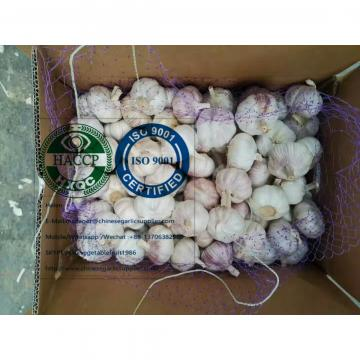 Normal white garlic with 10KG loose carton to Brazil market.