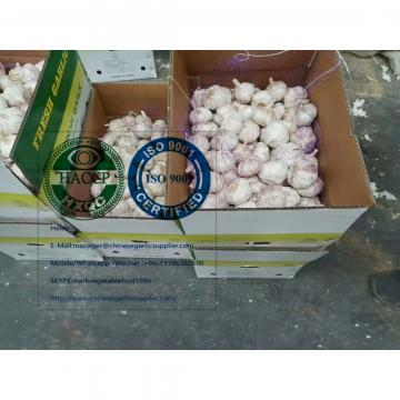 China Normal white garlic with 10KG loose carton to Brazil market.