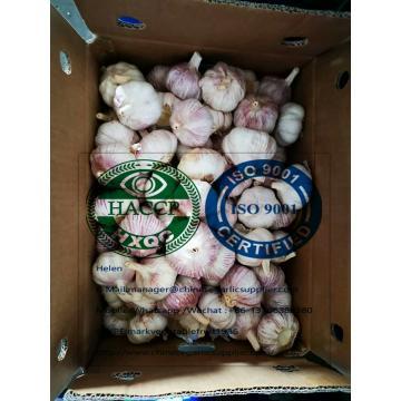 Normal white garlic with 10KG loose carton to Singapore market.