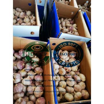10KG loose carton  Normal white garlic to Singapore market.