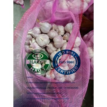 Normal white garlic with meshbag to Paraguay market.