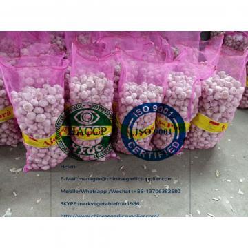 China Normal white garlic with meshbag to Paraguay market