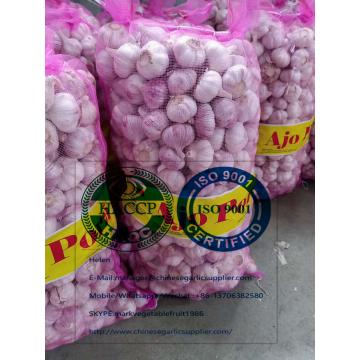 China Normal white garlic with meshbag to Paraguay market