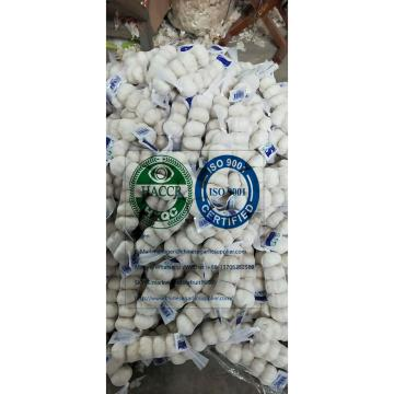 Pure white garlic with tube meshbag &Carton to Iraq market.