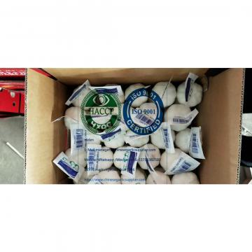 Pure white garlic with tube meshbag &Carton to Iraq market.