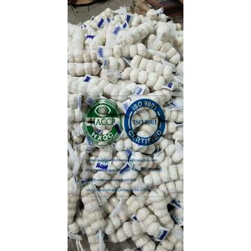 China Top Quality Pure white garlic to Iraq market.