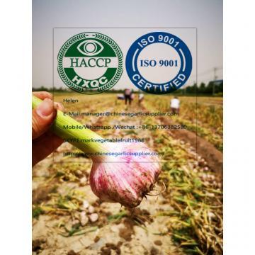 2020 new crop garlic from china