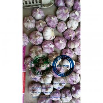 2020 new crop garlic is harvested in china