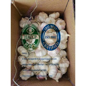 2020 new crop china garlic with 10 KG Loose carton package to Brazil market