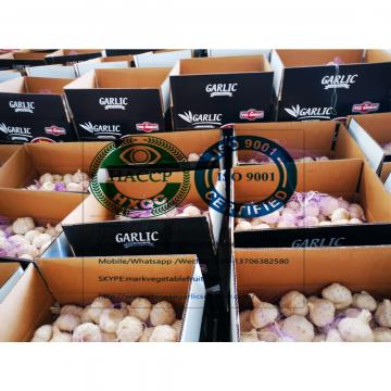 2020 New Top quality China pure white garlic with 10kg loose carton package