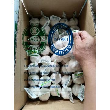 2020 new crop pure white garlic with tube meshbag & carton package to Turkey Market from china