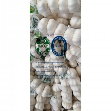 2020 new crop pure white garlic with tube meshbag & carton package to Turkey Market