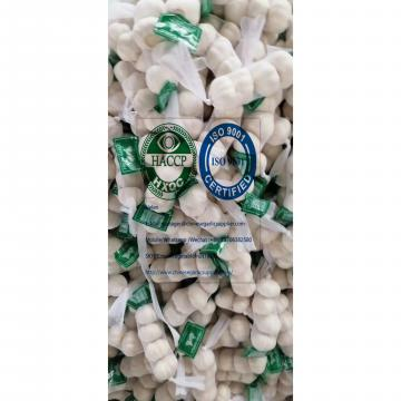 2020 new crop pure white garlic to Nicaragua Market from china