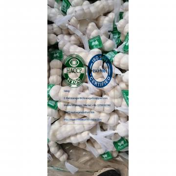 2020 new crop pure white garlic with tube meshbag & carton package to Nicaragua Market