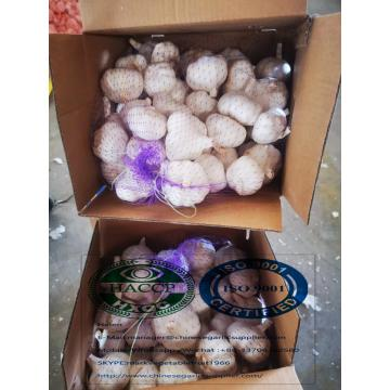 Pure white garlic with 5 kg carton package to Iraq Market