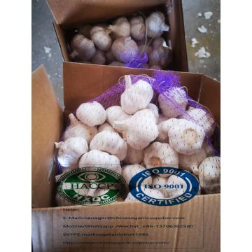 China Pure white garlic with 5 kg carton package to Iraq Market