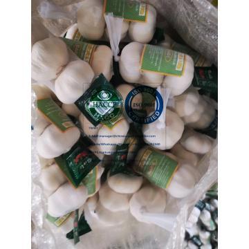 Pure white garlic with tube meshbag & carton package to Japan Market