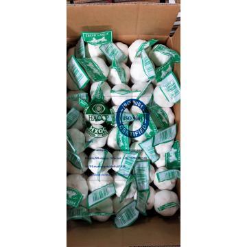 china Pure white garlic to Iraq Market