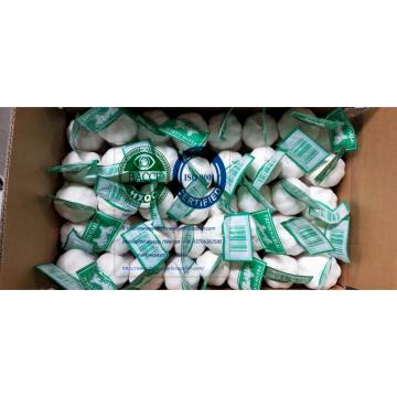 Pure white garlic with tube & carton package to Iraq Market