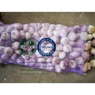 china Normal white garlic with meshbag package to Ecuador Market
