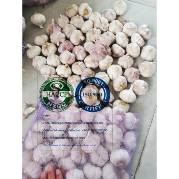 china Normal white garlic with meshbag package to Ecuador Market