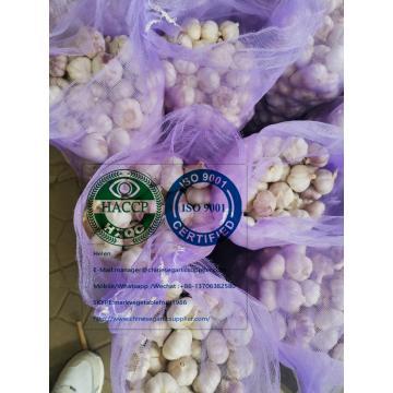 Normal white garlic with meshbag package to Ecuador Market
