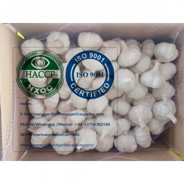Pure white garlic with meshbag & carton package to Turkey Market