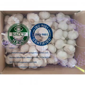 China Pure white garlic with meshbag & carton package to Turkey Market