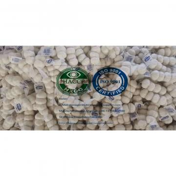 PURE WHITE GARLIC WITH SMALL CARTON BAG TO EU MARKET!
