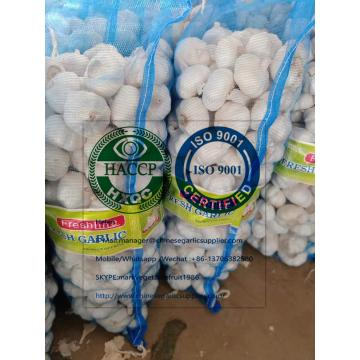 6.0 CM PURE WHITE GARLIC WITH MESHBAG TO TURKEY MARKET!