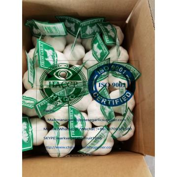 PURE WHITE GARLIC WITH TUBE MESHBAG TO MIDDLE EAST MARKET!