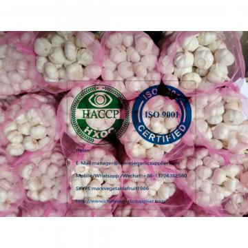 PURE WHITE GARLIC WITH MESHBAG TO TURKEY MARKET FROM CHINA
