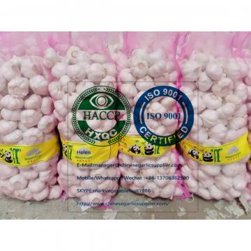 PURE WHITE GARLIC WITH MESHBAG TO TURKEY MARKET!