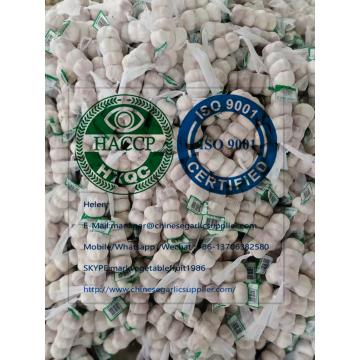 Normal White Garlic  To Dominican Market from china factory !