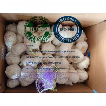 Top Quality White Garlic With Carton Package To UK Market!
