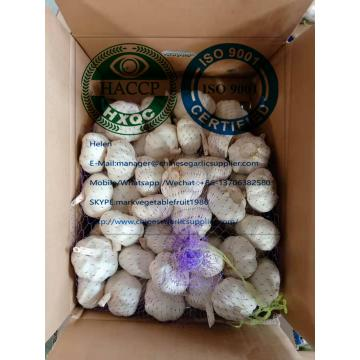 Top Quality China White Garlic With Carton Package To UK Market