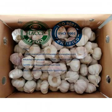 China normal white garlic to Singapore market