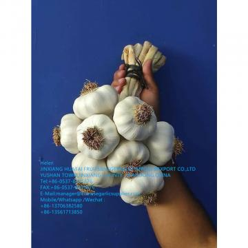 2021 new crop garlic is harvested ,waiting for your orders