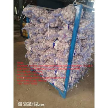 NORMAL WHITE GARLIC ARE EXPORTED TO EGUADOR MARKET WITH 10KG MESHBAG PACKAGE