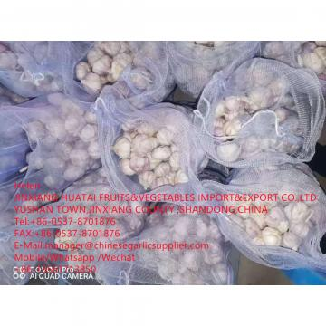 NORMAL WHITE GARLIC ARE EXPORTED TO EGUADOR MARKET WITH 10KG MESHBAG PACKAGE FROM CHINA GALRIC FACTORY