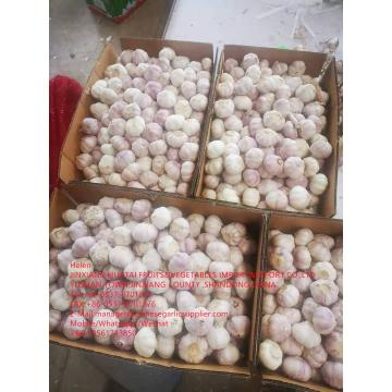 China normal white garlic are exported to Walmart in Latin America Countries