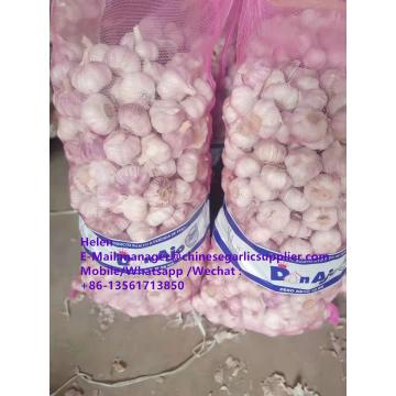 Top quality Normal white garlic with meshbag pacakge to Paraguay market
